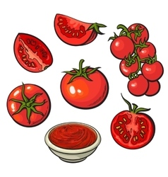 Sketch style set of ripe red vector