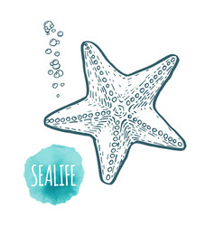 starfish drawing on white background hand drawn vector image vector image