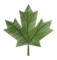 Colored maple leaf green sign canadian vector