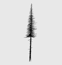 Tall fir tree nature design element vector