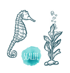 sea horse drawing on white background hand drawn vector image
