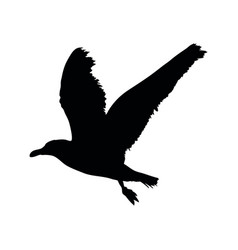 seagull flying silhouette isolated on white vector image vector image