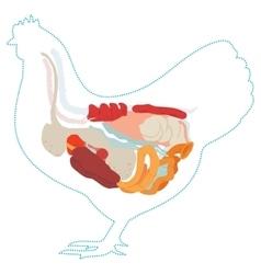 Chicken anatomy digestive system vector