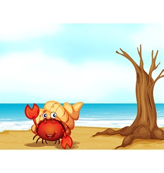 A crab with a shell at the seashore vector