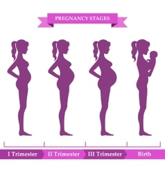 Pregnancy stages infographic vector