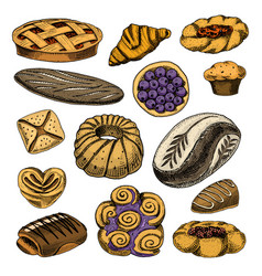 Bread and pastry donut belgian waffles and fruit vector