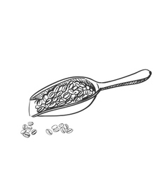 Doodle coffee beans and wooden spoon vector