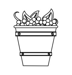 grapes in bucket vector image