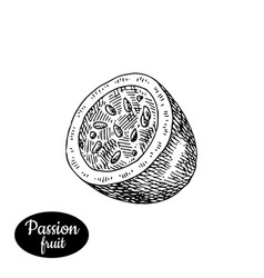 hand drawn sketch style fresh passionfruit vector image vector image