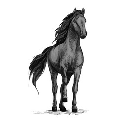 horse mustang stomping hoof sketch vector image