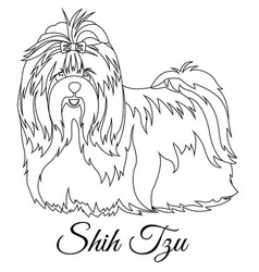 Shih tzu outline vector