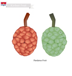 Pandanus fruit a native fruit in kiribati vector