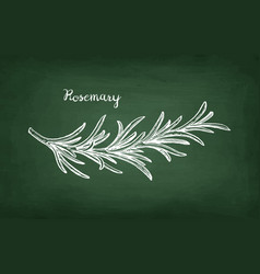 chalk sketch of rosemary branch vector image vector image