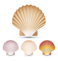 Scallop seashell set exotic souvenir vector