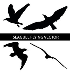 Set of silhouette seagull flying 4 in 1 on white vector