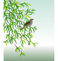 Nightingale on a branch vector