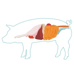 Pig anatomy digestive system vector