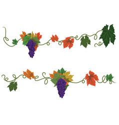 set of dividers with grapes vector image