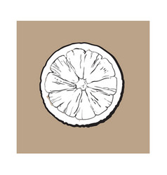 top view round slice half of ripe lime vector image vector image