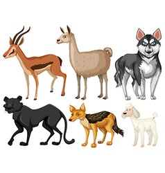 Different kind of wildlife vector
