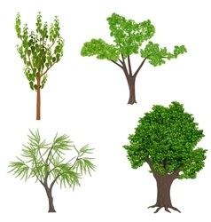 Highly detailed realistic cartoon trees set wood vector