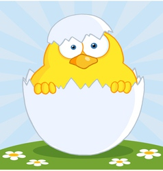 Yellow easter chick in a shell on a hill vector