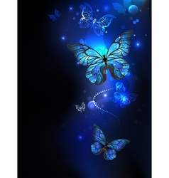 Morpho Butterfly in the Dark vector image