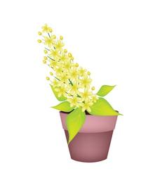 Cassia fistula flower in a ceramic pot vector