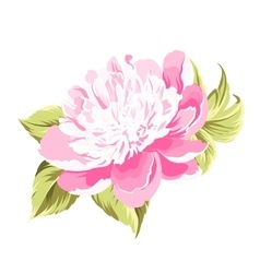 Peony spring flower vector