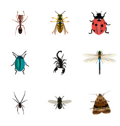 Realistic bee midge emmet and other vector