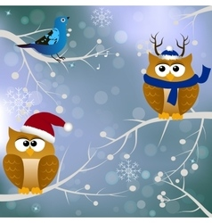 Winter card with birds vector