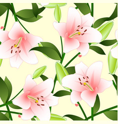 lilium candidum the madonna lily or pink lily on vector image