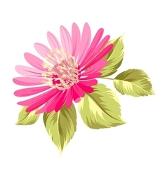Chrysanthemum bud vector