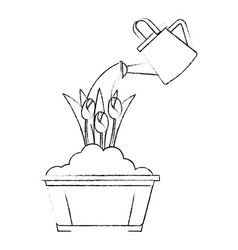 Beautiful roses cultivated in pot with sprinkler vector
