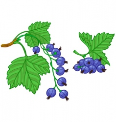 currant vector image vector image