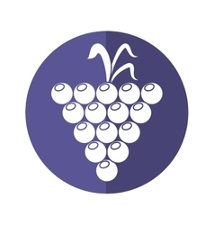 Grape grown organic fruit nature purple circle vector
