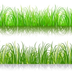 Green background grass vector image vector image
