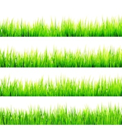 Fresh spring green grass Isolated On White EPS 10 vector image vector image
