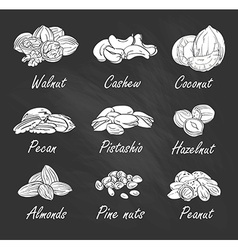 set of hand sketched nuts on chalkboard in hand vector image vector image