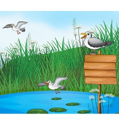 Three birds at the pond with a signboard vector image vector image