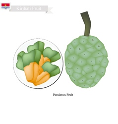 Screw pine a native fruit in kiribati vector