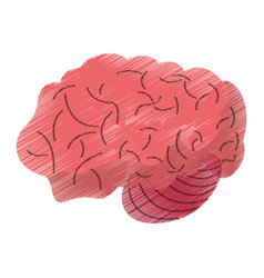 Drawing brain idea human organ vector