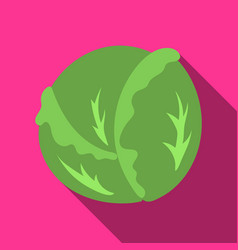 Cabbage icon flate singe vegetables icon from the vector