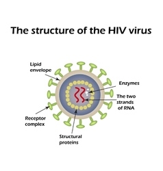 The structure of the aids virus hiv vector