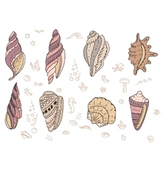 Set with sea shells vector