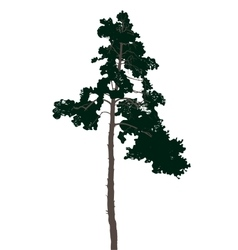 Highly detailed pine tree vector image vector image