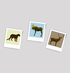 Polaroid photo of deer elk panther vector