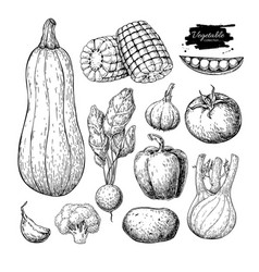 vegetable hand drawn set isolated vector image