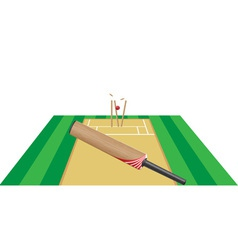 cricket 03 vector image
