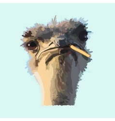 African ostrich vector image